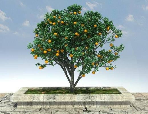 大树, 古树, 老树, 绿化, 景观