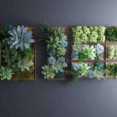 植物墙, 绿植墙, 多肉, 多肉植物墙