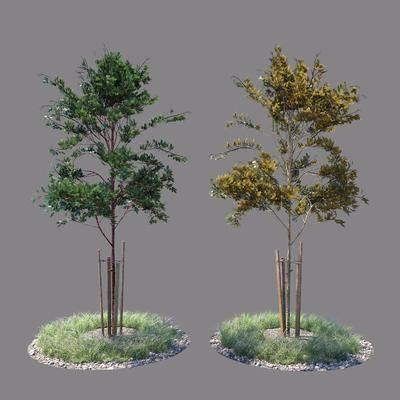 現代, 樹