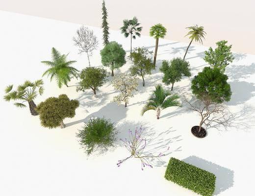 鳥瞰樹, 行道樹, 庭院樹, 四季樹, 景觀樹