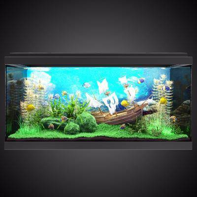 鱼缸, 水族, 现代, 鱼, 植物
