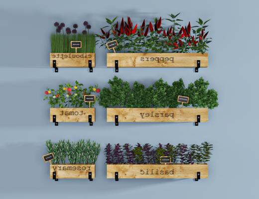 现代绿植, 室内盆栽, 植物, 花草