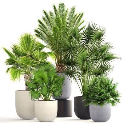 植物, 盆栽, 绿植, 花盆, 现代