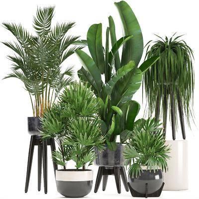 盆栽, 花盆, 植物, 现代