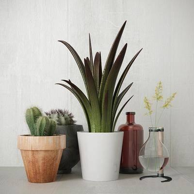 盆栽, 植物, 北欧