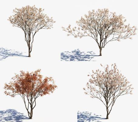 景观树, 樱花树, 树木, 绿植植物, 现代