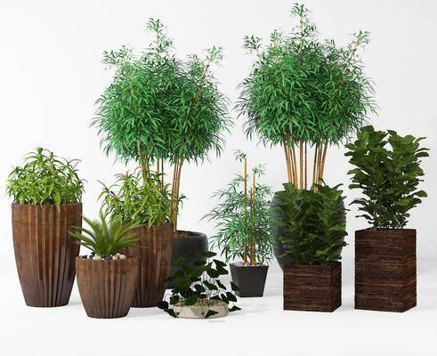盆栽, 植物, 花盆