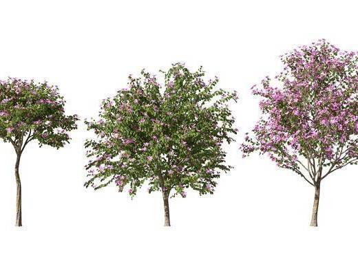 現代, 景觀樹, 單體