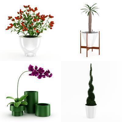 植物盆栽, 树木花卉, 现代