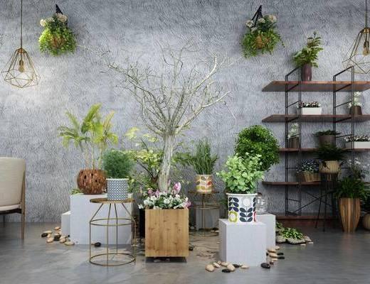 盆栽, 组合架, 装饰架, 吊灯, 单人椅, 墙饰, 植物, 现代