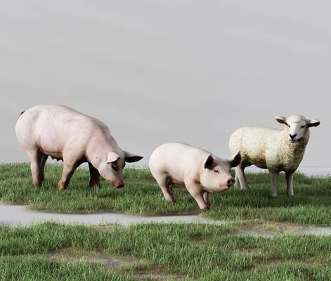 动物生猪, 草羊, 绵羊草坪, 现代