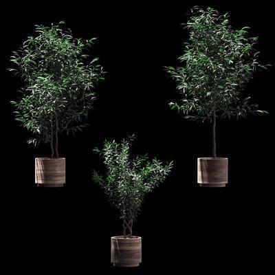 绿植, 盆栽, 植物, 盆栽组合