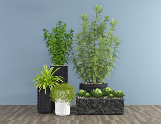 现代多肉绿植, 盆栽, 植物, 装饰品