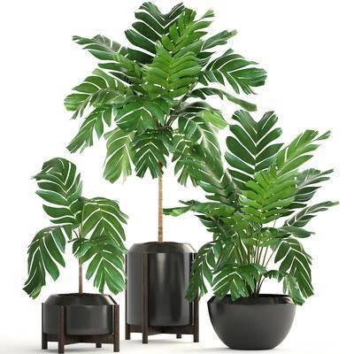 盆栽, 植物, 绿植, 花盆, 现代
