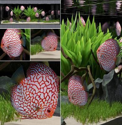 鱼缸, 水草, 鱼, 现代