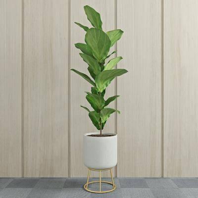 盆栽, 植物, 绿植, 现代植物盆栽, 现代