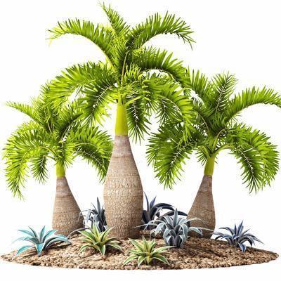 景观树, 椰树, 现代