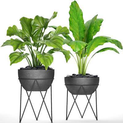 盆栽, 花盆, 现代, 绿色植物