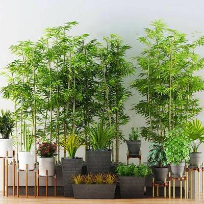 植物盆栽, 盆栽, 陈设品, 现代, 下得乐3888套模型合辑