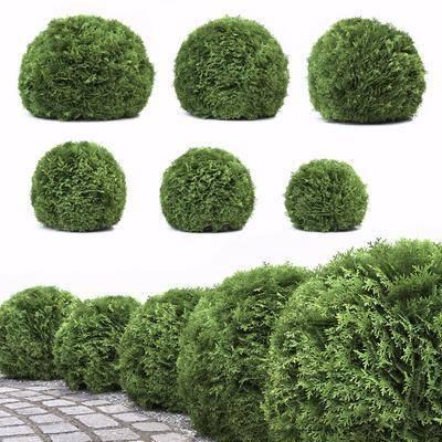 灌木绿篱, 灌木丛, 草堆, 植物, 现代