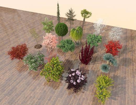 植物, 樹木組合