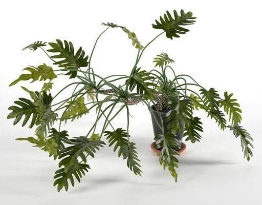 綠植盆栽, 現代