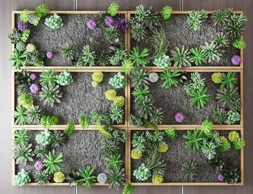 植物墙, 植物, 绿植