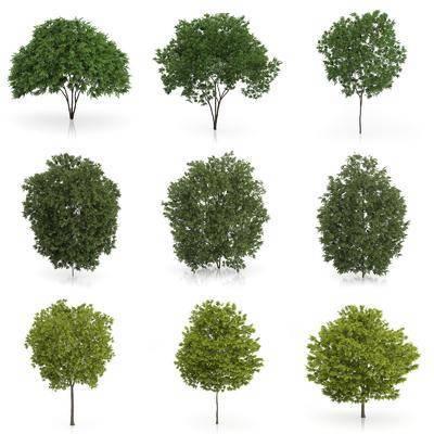 树木, 灌木, 现代树木, 植物, 室外植物, 绿植, 现代