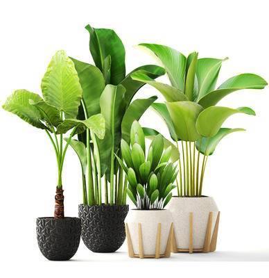 绿植, 盆栽, 现代, 植物