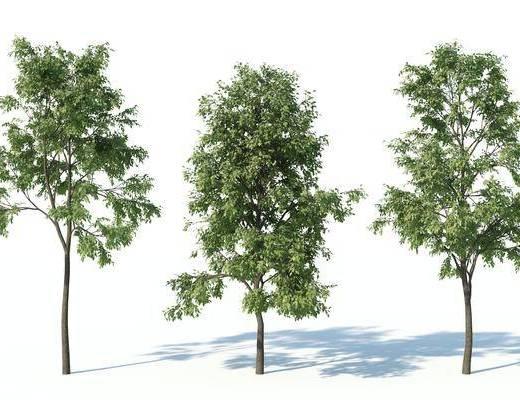 現代, 樹, 植物