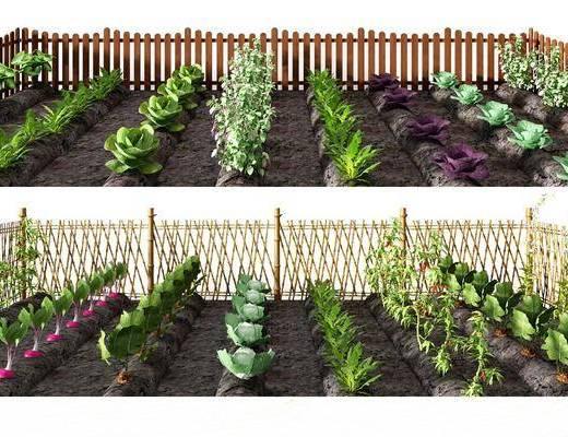 菜园蔬菜, 现代