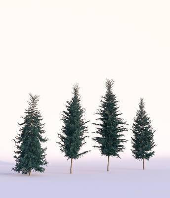 树木, 叶松, 现代