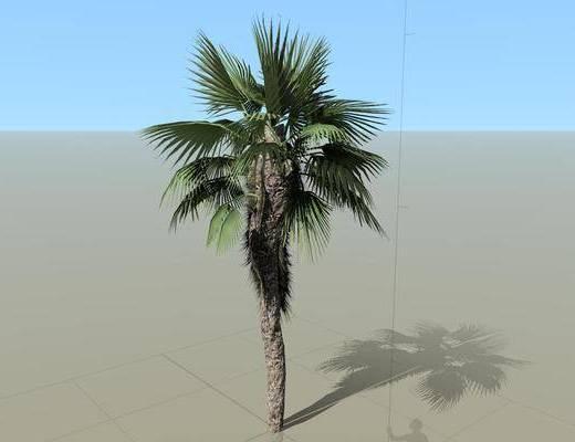 树木, 植物, 棕榈树