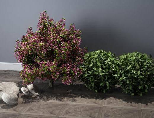 植物, 灌木, 花草