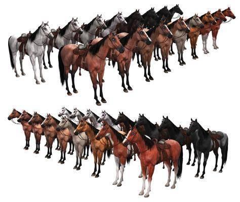 动物, 马, 骏马