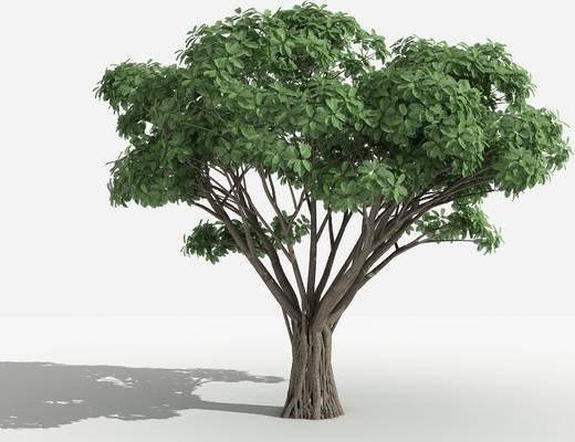 灌木, 树木, 植物, 花草, 景观植物, 园林, 小区植物