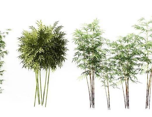 竹子組合, 綠植植物, 現代