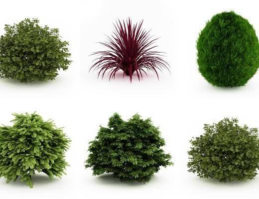 灌木, 植物, 树木, 现代