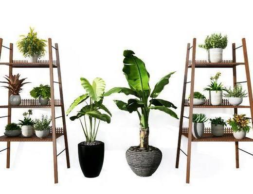 花架, 装饰架, 盆栽组合, 绿植植物, 现代