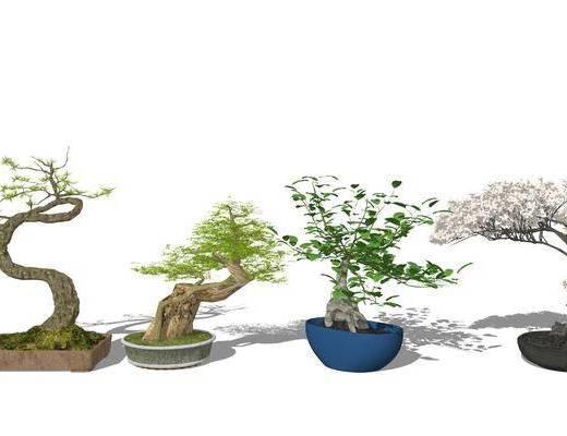 植物, 盆栽, 花草组合