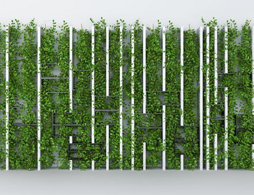 植物, 绿植墙, 植物墙, 藤蔓