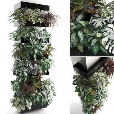 植物墙组合, 植物绿植, 现代