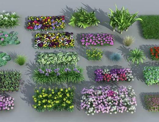 灌木, 景观组合, 植被, 鸢尾, 牵牛花, 鸟巢蕨, 睡莲