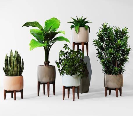 盆栽, 植物, 花草