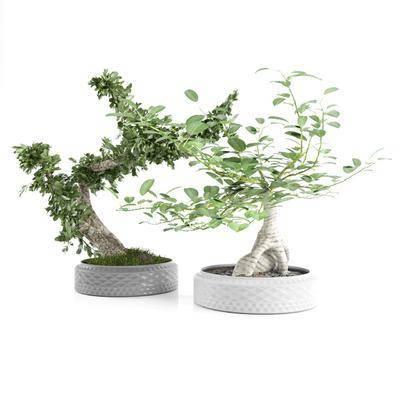 盆栽, 绿植植物, 现代
