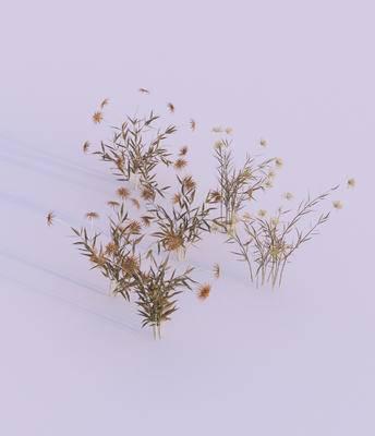 灌木, 现代, 户外, 菊花, 植物, 花草, 现代户外灌木, 双十一