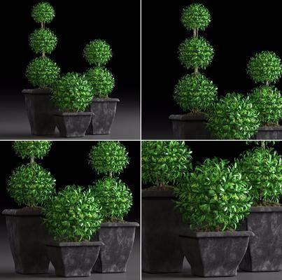 现代盘栽, 盘栽, 植物, 现代