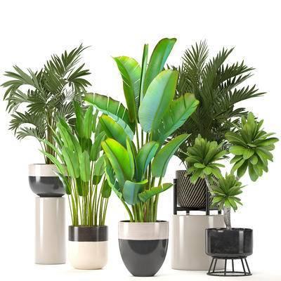 盆栽, 植物, 花盆, 现代, 绿植