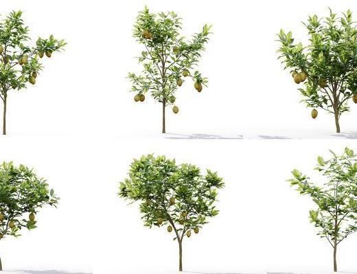 树木, 植物, 柠檬树组合
