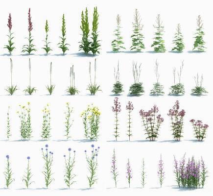 現代, 灌木, 植物